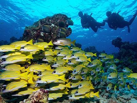 Banana Reef Scuba